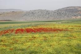 シリア142.JPG